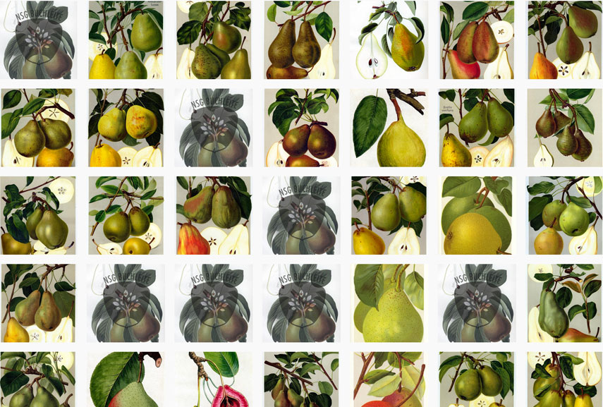responsive design - fruit